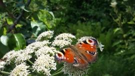 vlinder-zielskwaliteiten-transformatie