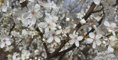 Yoga danza voor meer energie in het voorjaar